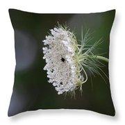 jammer Garden Lace 2 Throw Pillow