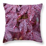 Japanese Acer Palmatum Atropurpurea Shrub Throw Pillow