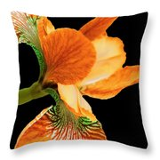 Japanese Iris Orange Black Throw Pillow