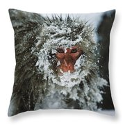Japanese Macaque Covered In Snow Japan Throw Pillow