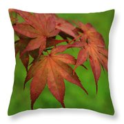 Japanese Maple Autumn Colors Throw Pillow