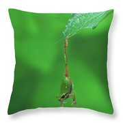Japanese Tree Frog Hyla Japonica Throw Pillow