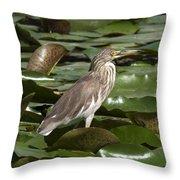 Javan Pond Heron Dthn0071 Throw Pillow