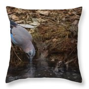 Jay Drinking Water Throw Pillow