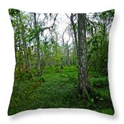 Jean Lafitte National Preserve Swamp Throw Pillow
