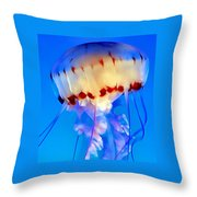 Jellyfish 3 Throw Pillow by Dawn Eshelman