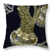 Jellyfish Of Aquarium Of The Bay San Francisco Throw Pillow