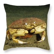 Jonah Crab Throw Pillow
