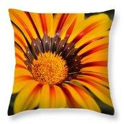 Jubilant Daisy Throw Pillow