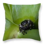 Jumper In Yucca Throw Pillow