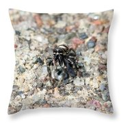 Jumping Spider Face On Throw Pillow