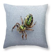 Jumping Spider - Green Salticidae Throw Pillow