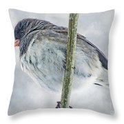 Junco On A Twig Throw Pillow