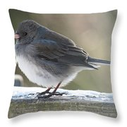 Junco On Board Throw Pillow