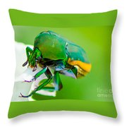 June Bug Fig Beetle Throw Pillow