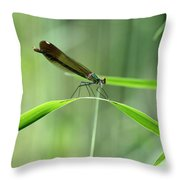 June Damselfly  Throw Pillow