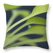 June Plantain Lily Close Ups Throw Pillow