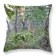Jungle Forest In Chitwan Np-nepal Throw Pillow