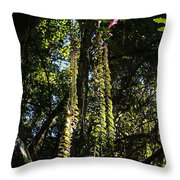 jungle in La Amistad National Park Panama 7 Throw Pillow