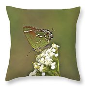 Juniper Or Olive Hairstreak Butterfly - Callophrys Gryneus Throw Pillow