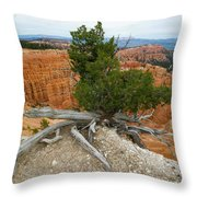 Juniper Tree Clings To The Canyon Edge Throw Pillow