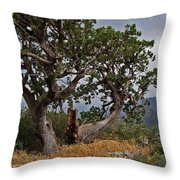 Juniper Tree On The Edge Of The Verde Valley Throw Pillow