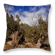 Juniper Trees At The Ghost Ranch Color Throw Pillow