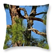 Just A Tangle Of Pine Tree Branches Throw Pillow