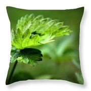 Just Green Throw Pillow by Jeremy Hayden