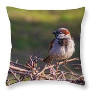 Just Made It Through The Winter - Featured 3 Throw Pillow