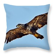 Juvenile Bald Eagle In Flight Close Up Throw Pillow