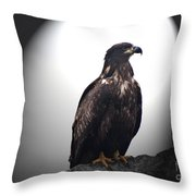 Juvenile Bald Eagle Year 1 Throw Pillow