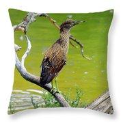 Juvenile Black-crowned Night Heron  Throw Pillow