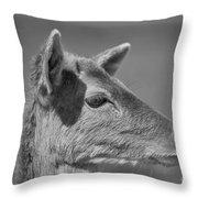 Juvenile Deer Close-up V2 Throw Pillow