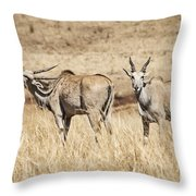 Juvenile Eland Throw Pillow