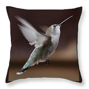 Juvenile Female Anna's Hummingbird In Flight Throw Pillow