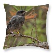 Juvenile Gray Jay Throw Pillow