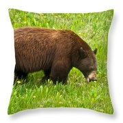 Juvenile Grizzly Bear In Kootenay Np-bc Throw Pillow