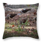 Juvenile Ibis Throw Pillow