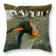 Juvenile King Penguin Throw Pillow
