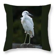 Juvenile Little Blue Heron On Sign Throw Pillow