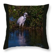 Juvenile Little Blue With Lobster 1 Throw Pillow