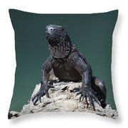Juvenile Marine Iguana Galapagos Throw Pillow
