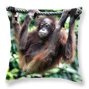 Juvenile Orangutan Borneo Throw Pillow