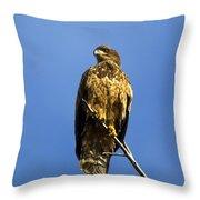 Juvenile Perch Throw Pillow