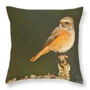 Juvenile Redstart Phoenicurus Phoenicurus Throw Pillow