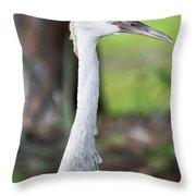 Juvenile Sandhill Crane Grus Canadensis Pratensis I Usa Throw Pillow