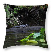 Juvie Gator Throw Pillow