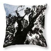 Kahikatea New Zealand Native Tree Throw Pillow