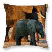 Kalahari Elephants Throw Pillow